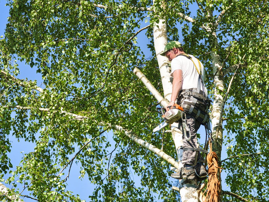Tree Trimming Cutting Cheap Tree Services Near Me Hillsboro Or